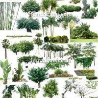 دانلود آبجکت درخت فتوشاپ