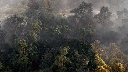 آموزش ساخت جنگل