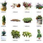 دانلود آبجکت درخت گل گیاه فضای سبز Dosch Design 2D Viz-Images Plants