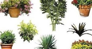 دانلود آبجکت درخت گل گیاه فضای سبز Dosch Design 2D Viz Images Plants