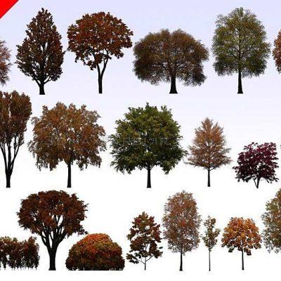 دانلود رایگان تکسچر PNG درخت اورموشن Evermotion Textures 4Ever Vol 9