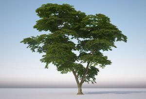 آموزش ساخت متریال درخت