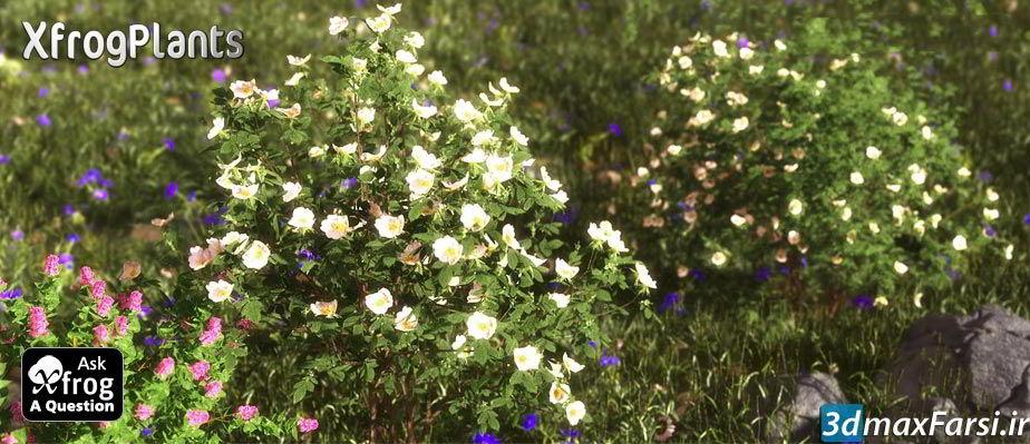 بهترین پکیج آبجکت درخت و گل گیاه (دو بعدی - سه بعدی) XfrogPlants