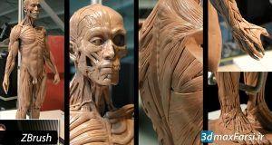 آموزش حجاری آناتومی بدن انسان نرم افزار زیبراش ZBrush