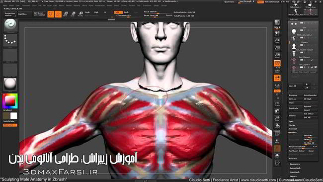 آموزش طراحی آناتومی بدن انسان زیبراش Sculpting Anatomy ZBrush