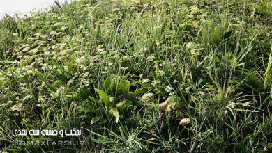 Photo of دانلود مدل سه بعدی چمن آنریل انجین : گل و گیاه پک چمنزار Unreal Engine