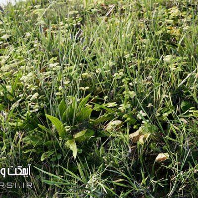 دانلود مدل سه بعدی چمن آنریل انجین : گل و گیاه پک چمنزار Unreal Engine
