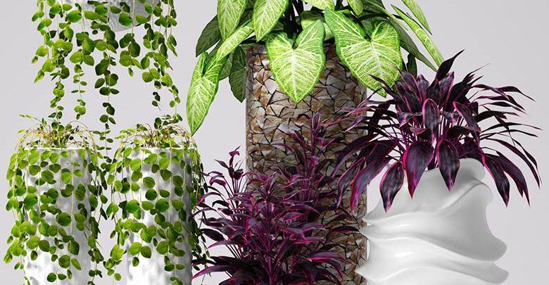 آبجکت گیاه تزئینی تری دی مکس 3DDD / 3DSky PRO models – Decorative Plants