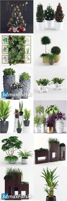آبجکت گیاه تزئینی تری دی مکس وی ری
