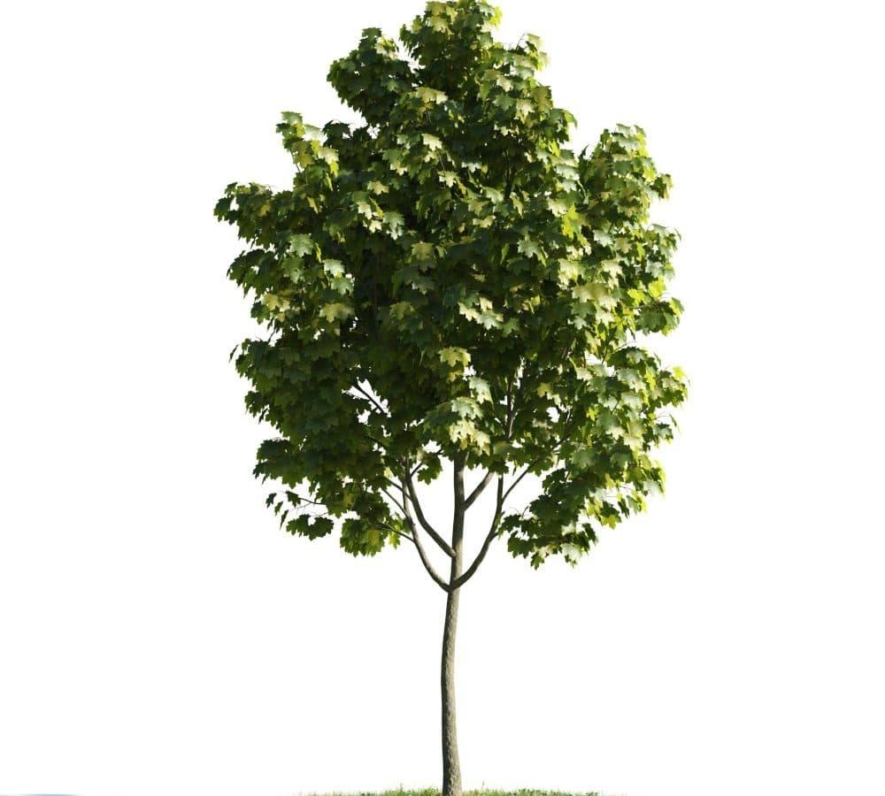 دانلود آرک مدل درخت مخصوص نمای ساختمان Evermotion - Archmodel Vol 176