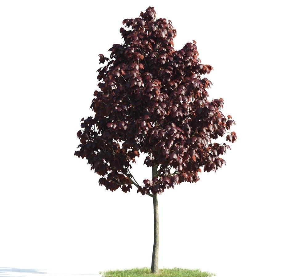Evermotion - Archmodel Vol 176 آبجکت درخت سه بعدی