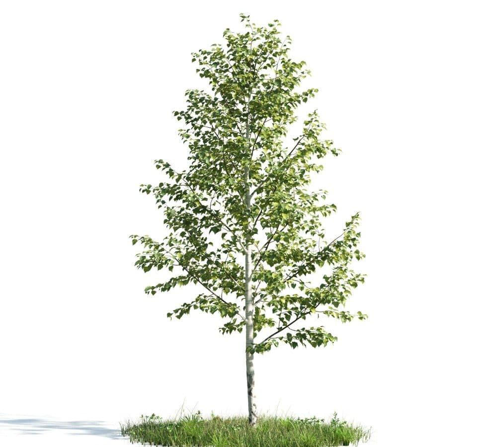 Evermotion - Archmodel Vol 176 آبجکت درخت نما ساختمان