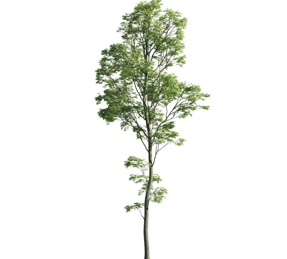 Evermotion - Archmodel Vol 176 مدل سه بعدی درخت نما