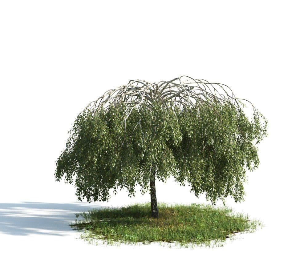 Evermotion - Archmodel Vol 176 درخت سبک برای تری دی مکس