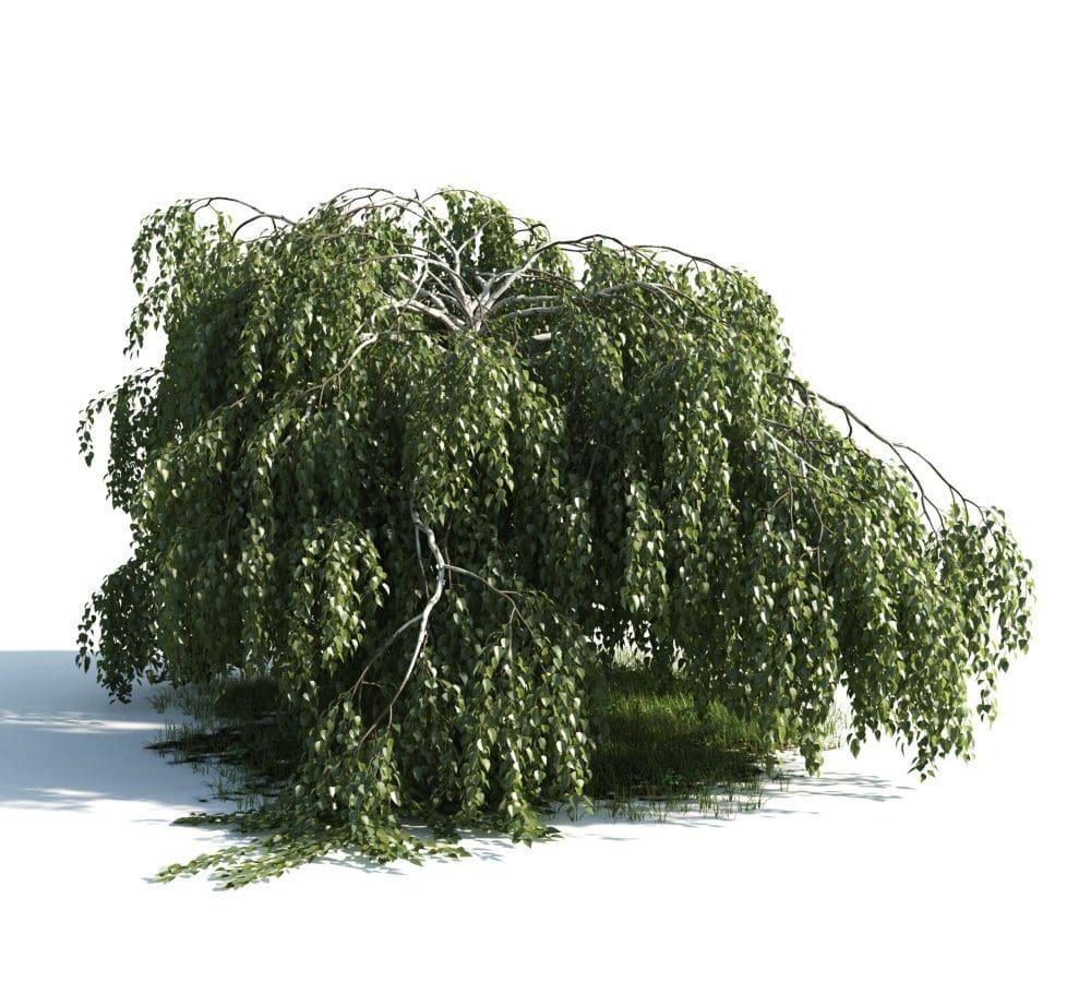 Evermotion - Archmodel Vol 176 دانلود آبجکت درخت زیبا