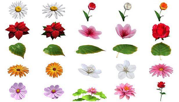 پروژه آماده افتر افکت اجزای گل گیاه سبزه videohive Flower Elements