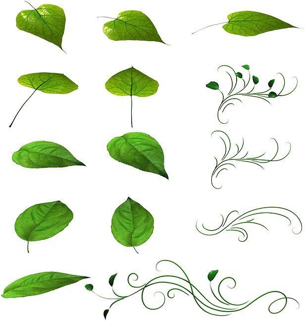 دانلود پروژه آماده انیمیشن اجزای گل گیاه videohive : 108 Flower Elements