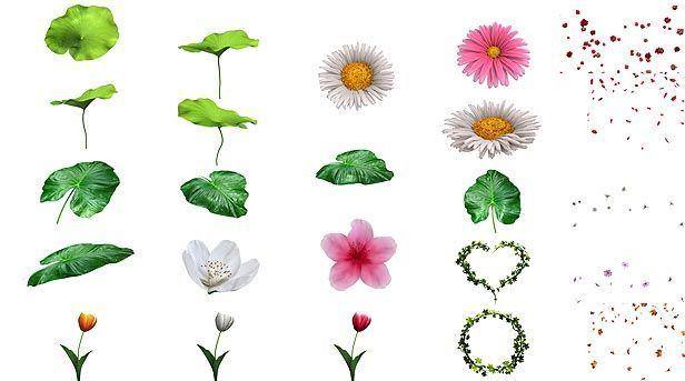 پروژه آماده عناصر گل و گیاه افتر افکت