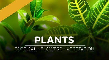 دانلود تصاویر مت پینتینگ Matte Painting Set Extensions Plants