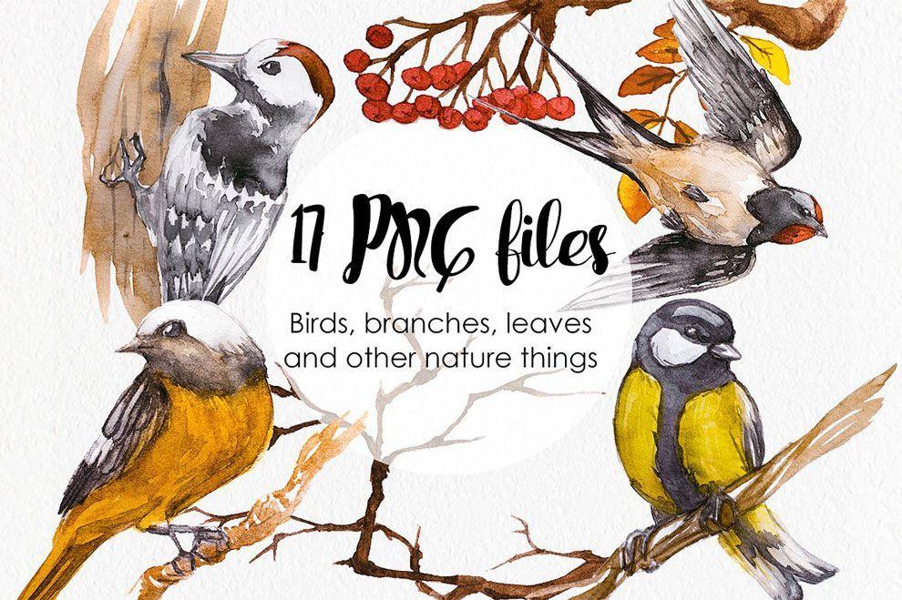 watercolor russian birds graphics template مجموعه تصاویر گرافیکی طرح آبرنگ پرندههای روسی