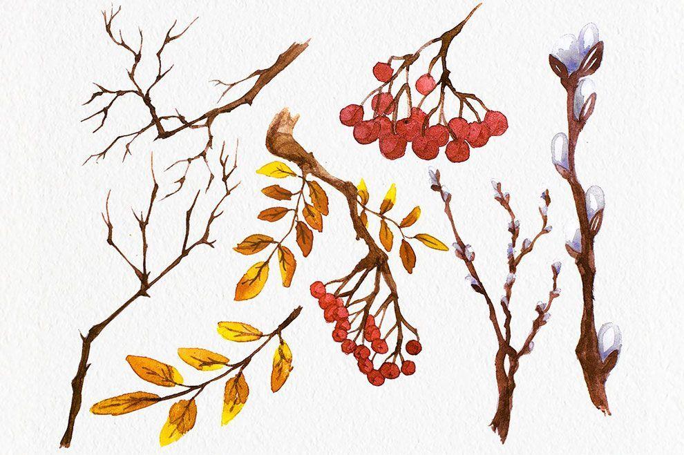 دانلود تصاویر گرافیکی شاخه درخت و پرنده طرح آبرنگ PNG