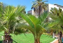 دانلود تکسچر درخت خرما (نخل) نما Cut out Palms vegetation Trees