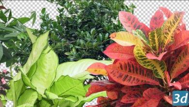 گلدان دو بعدی CUT OUT POT PLANTS PACK 1-3