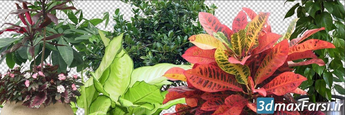 دانلود گیاه برای پست پروداکشن