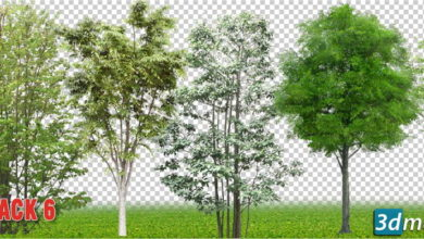 دانلود تکسچر درخت نازک برای فتوشاپ Cut out Vegetation Trees