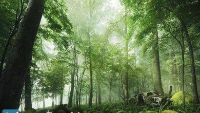 دانلود رایگان آرچ مدل Archmodels vol.154 : مدل سه بعدی گل و درخت