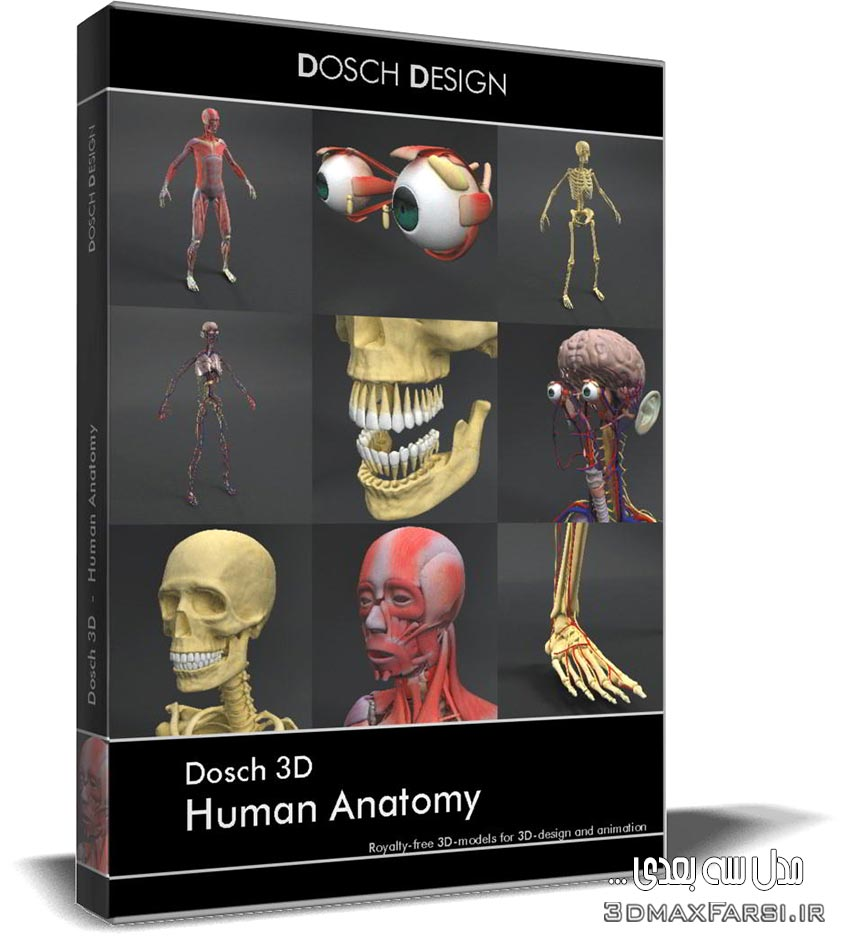دانلود رایگان مدل سه بعدی آناتومی بدن انسان Dosch 3D: Human Anatomy