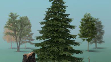 دانلود PixelSquid – Forest Details Collection
