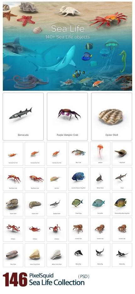 دانلود PixelSquid – Sea Life Collection