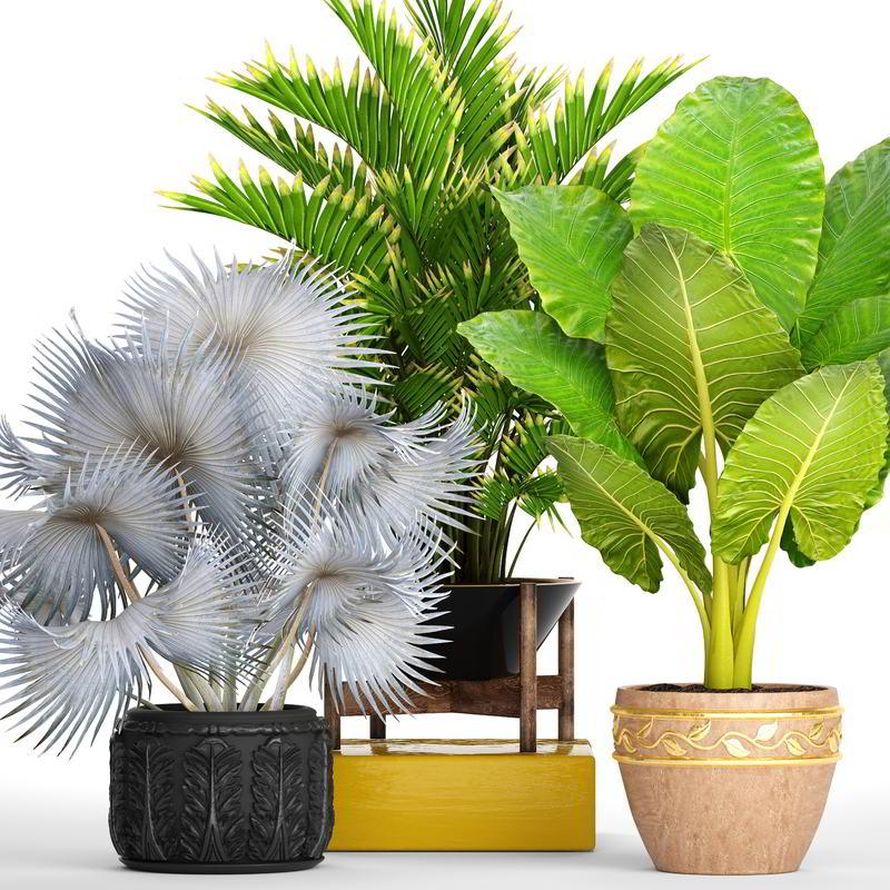 مدل سه بعدی گل و گیاه TurboSquid – 3D Collection of tropical plants