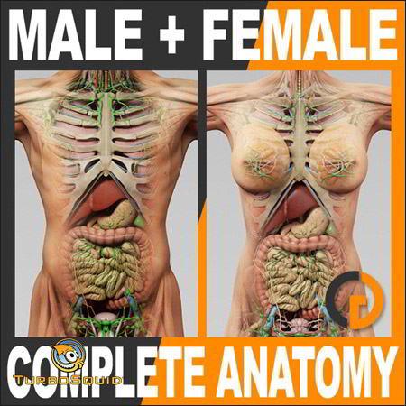 آناتومی بدن انسان TurboSquid – 3D Human Male and Female Complete Anatomy