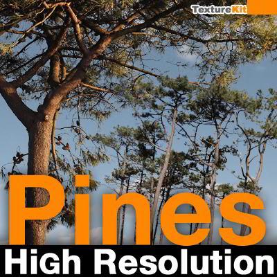 دانلود تکسچر درخت TurboSquid – Pines High Resolution Textures