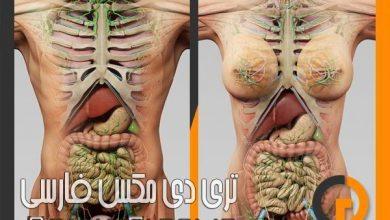 دانلود مدل آناتومی بدن انسان سینمافوردی TurboSquid – human male and female complete anatomy for c4d