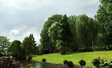 آبجکت درخت سبک تری دی مکس 3dsmax - Vray