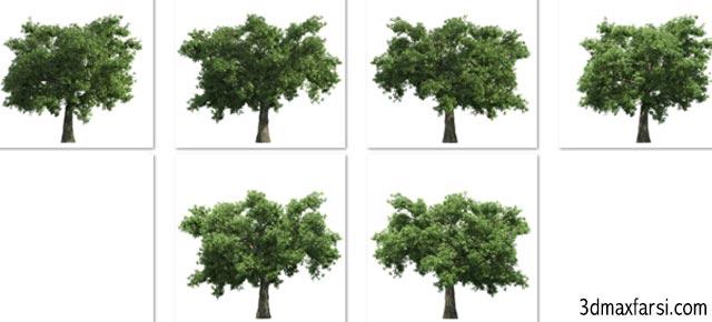 دانلود آبجکت درخت برای فتوشاپ 2 بعدی